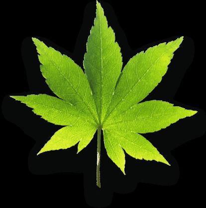 ohs-leaf-1