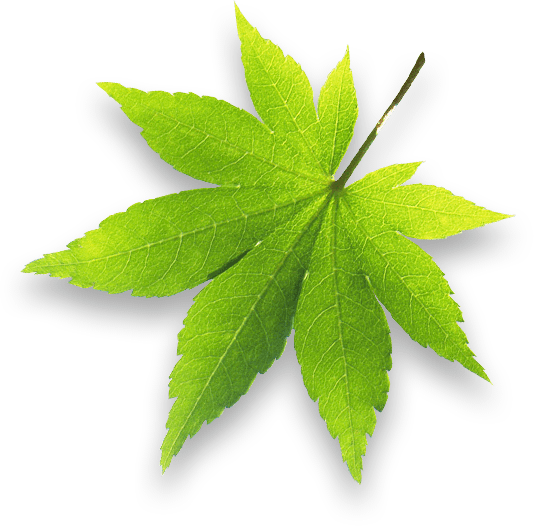 ohs-leaf-2