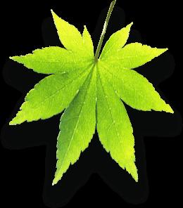 ohs-leaf-3